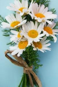 daisy bunch