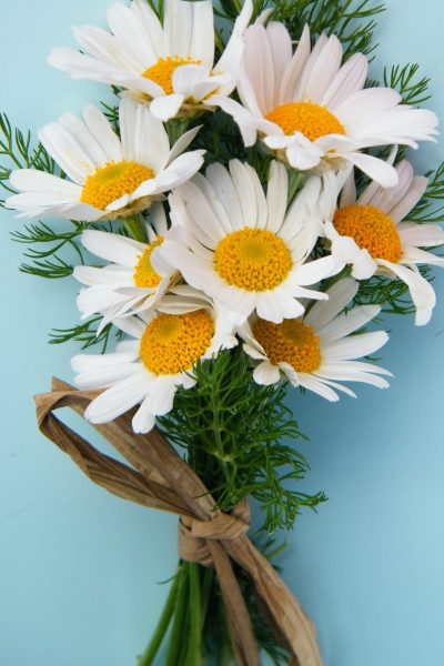 daisy bunch