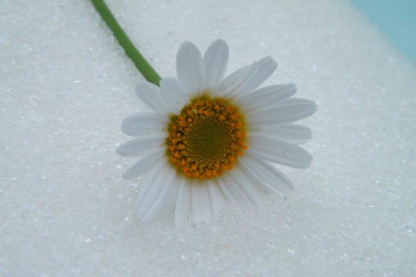 daisy drying silica sand