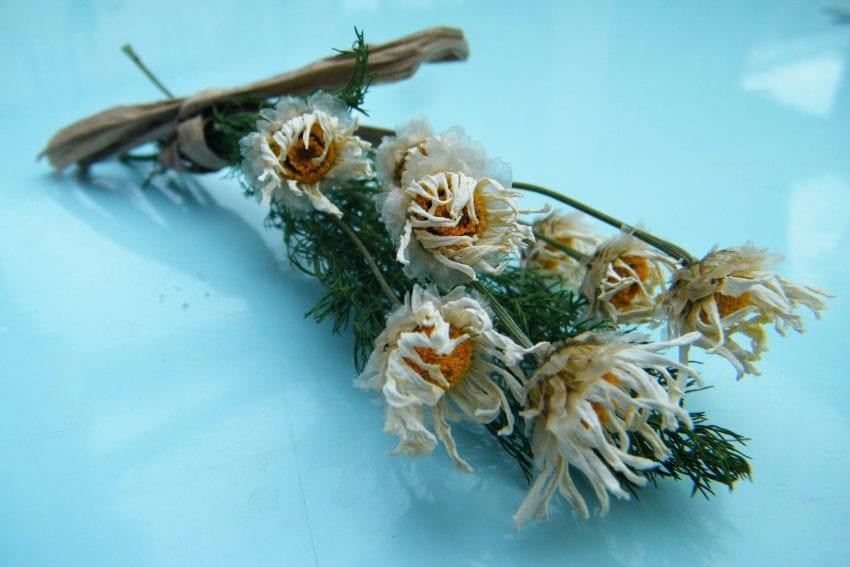 dried daisy bunch