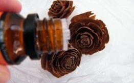 cedarwood moth repellent cedarwood essential oil