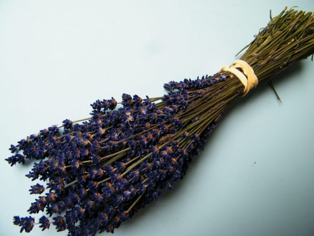 dried lavender bunch uk