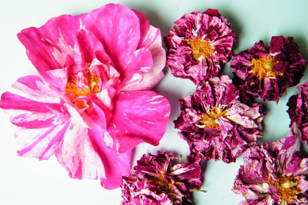 dried rosa mundi flowers