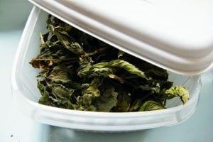 dried leaves in tupperware