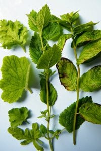 pelargonium lemon balm peppermint