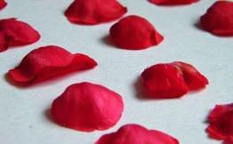pressing rose petals