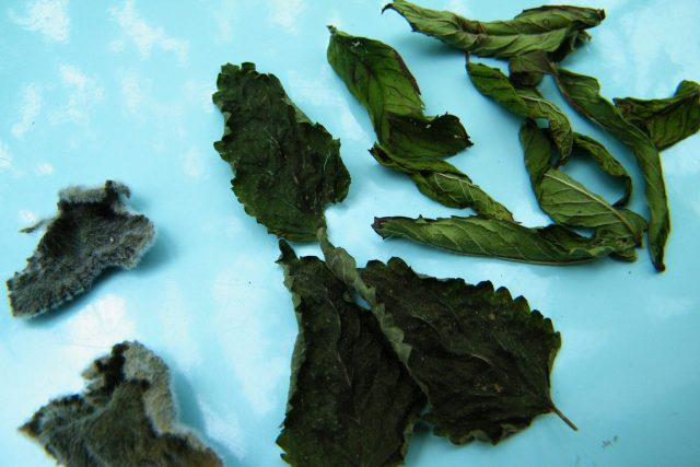 dried scented leaves