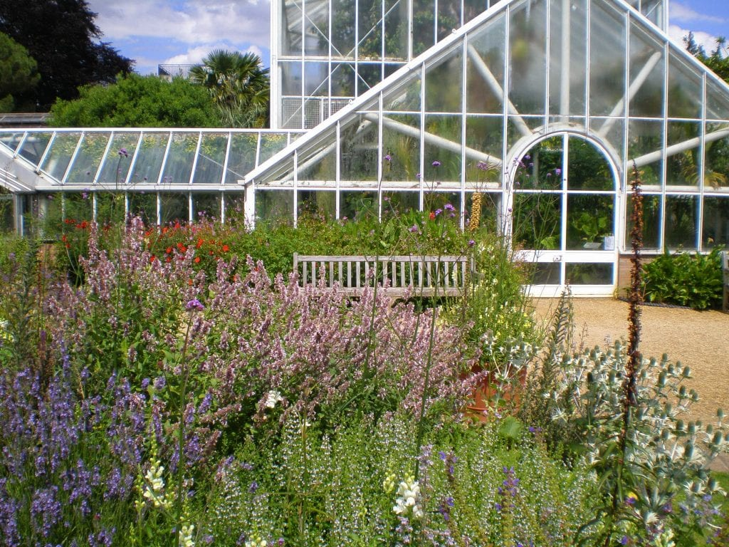 Flowers at Cambridge University Botanic Garden