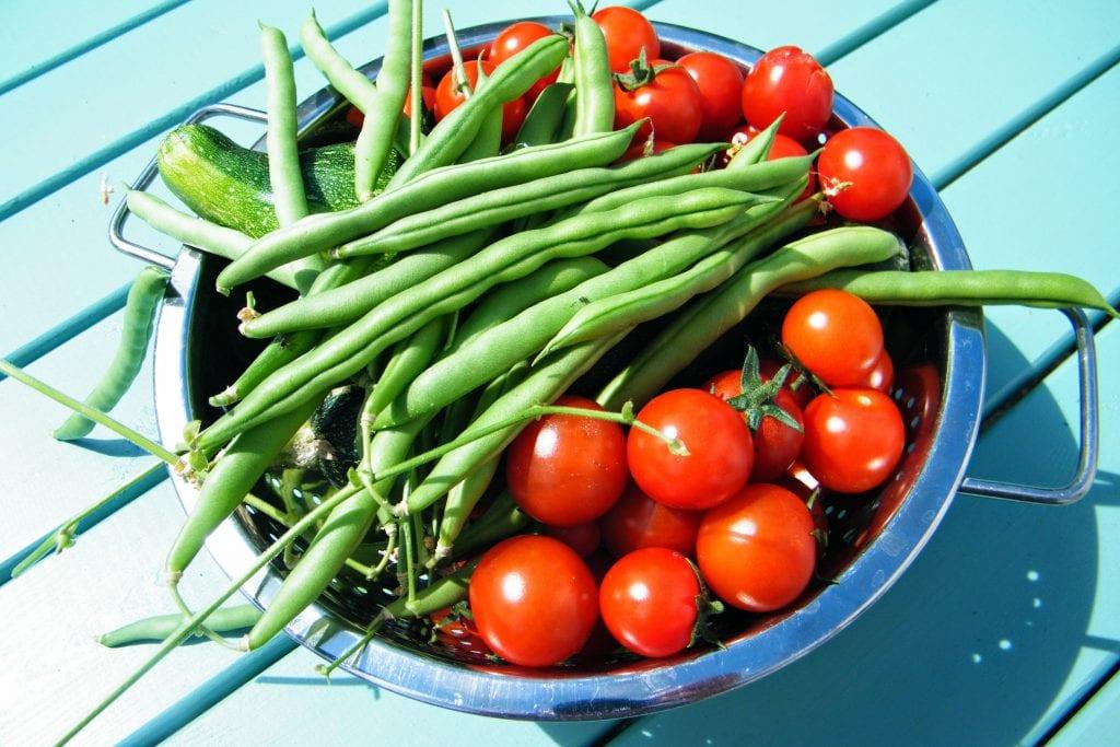 veg harvest