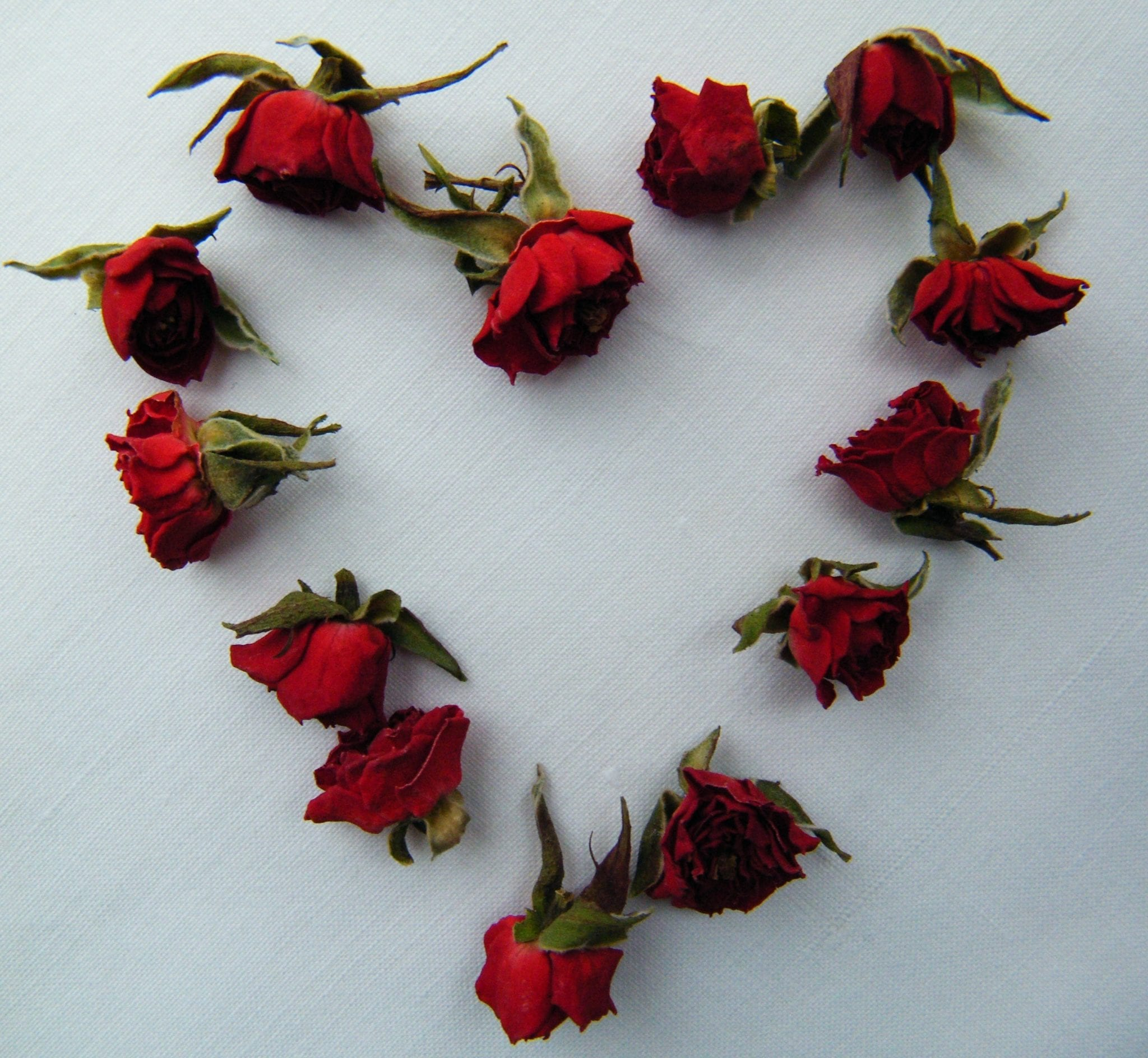 red rose buds heart