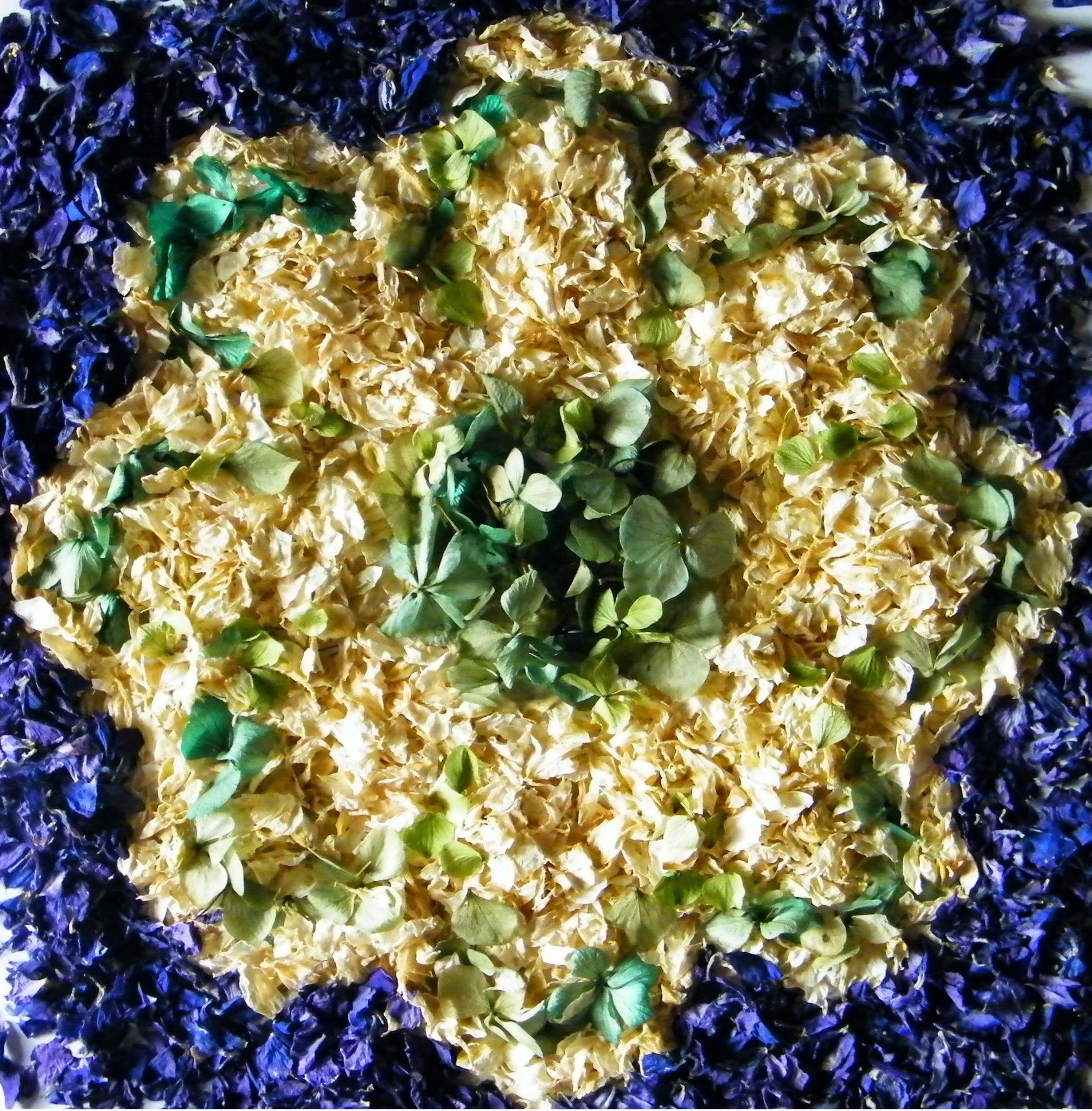 logo dried flower petals delphinium petals