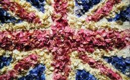 British natural delphinium petal confetti