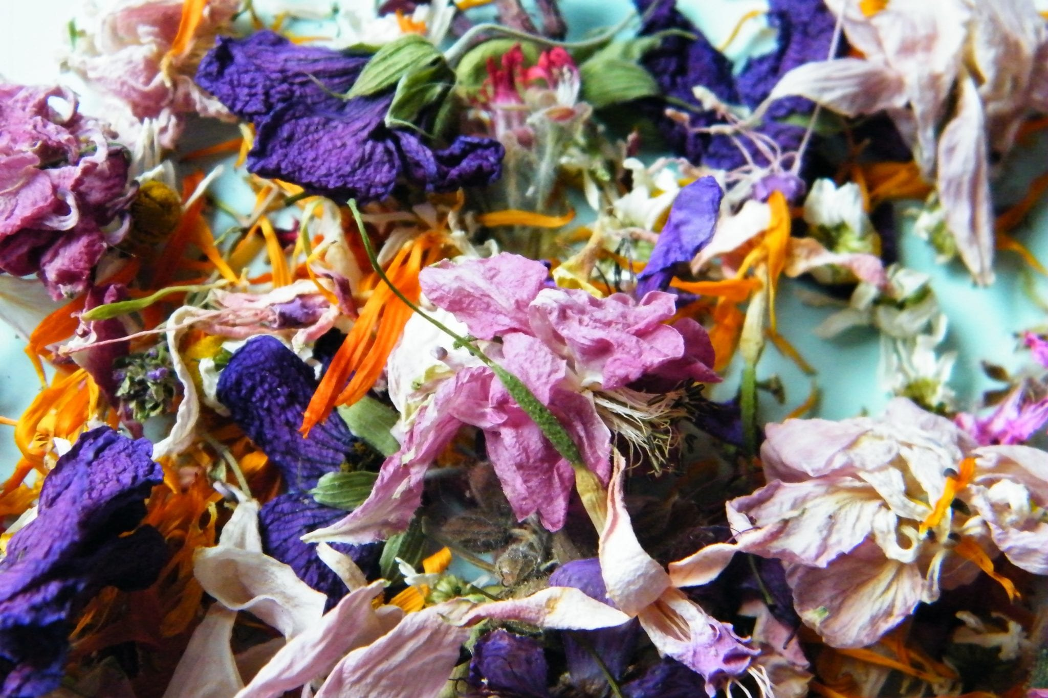 pretty dried flowers