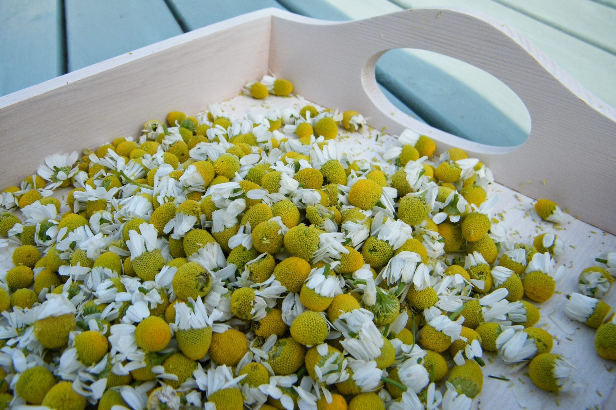 chamomile flowers tray