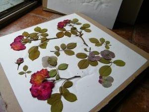 pressing flowers roses