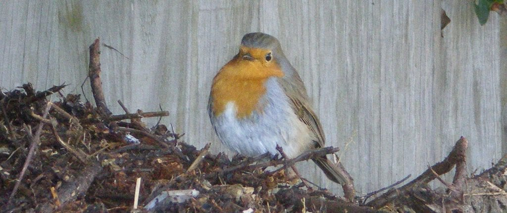 dried flower crafts blog - fat christmas robin