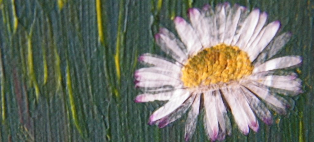 pressed flower project daisy closeup