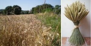 make seasonal wheat sheaf