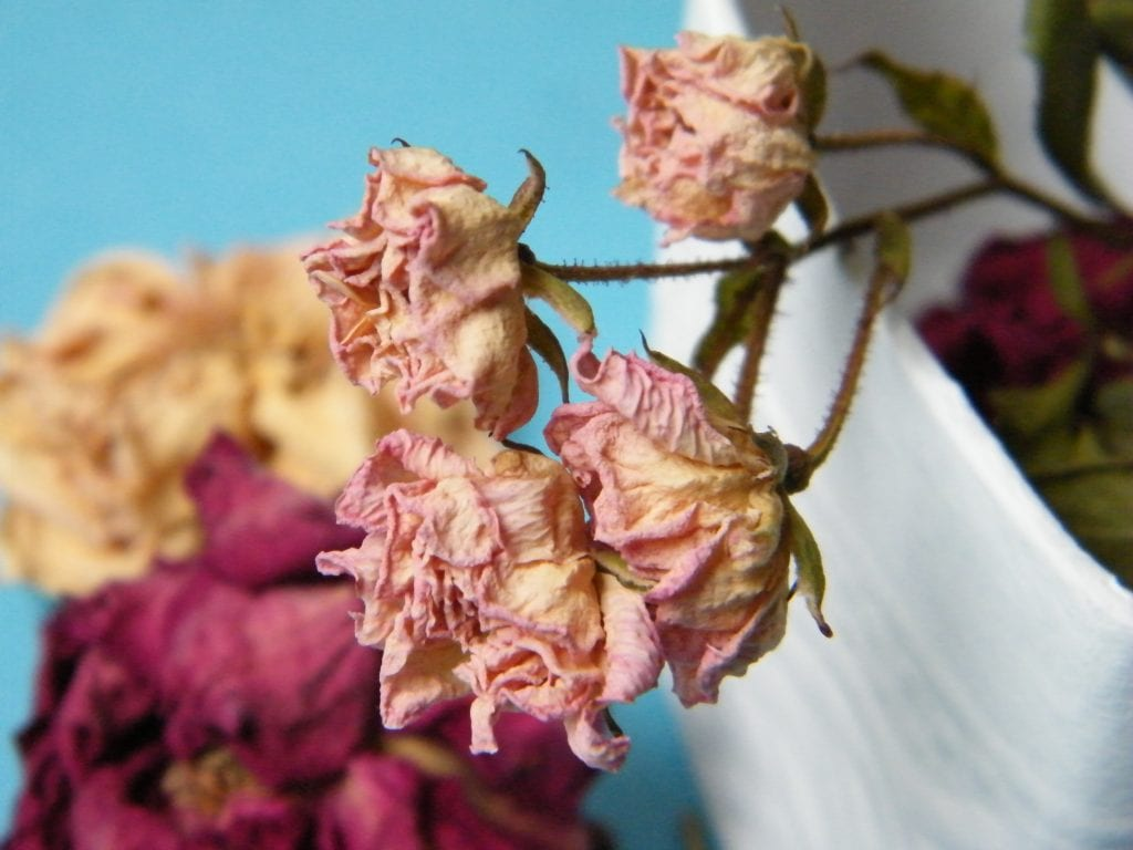dried flowers memories box