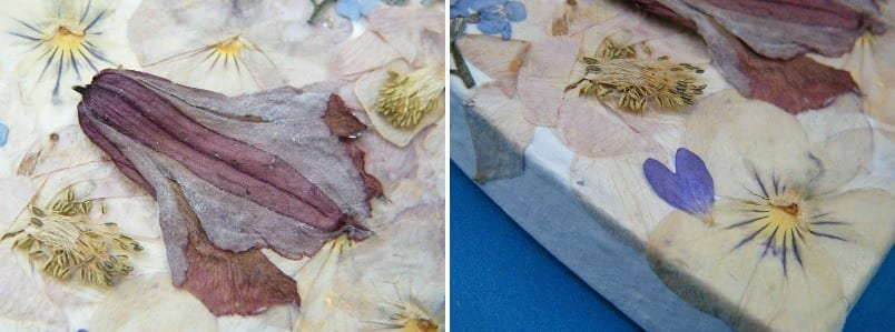 pressed flower box lid closeup