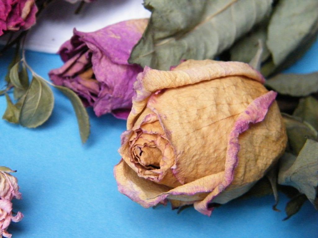 preserve valentines flowers dried roses