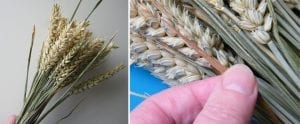 diy wheat sheaves