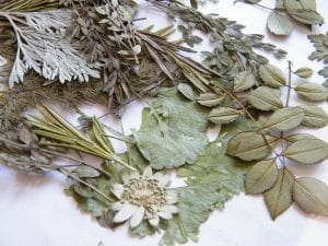pressed herbs for diy christmas card