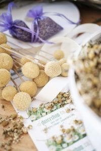dry billy buttons stems