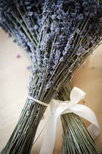detail lavender bunches