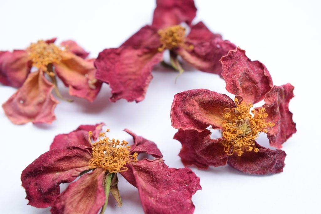 drying roses rosa mutabilis
