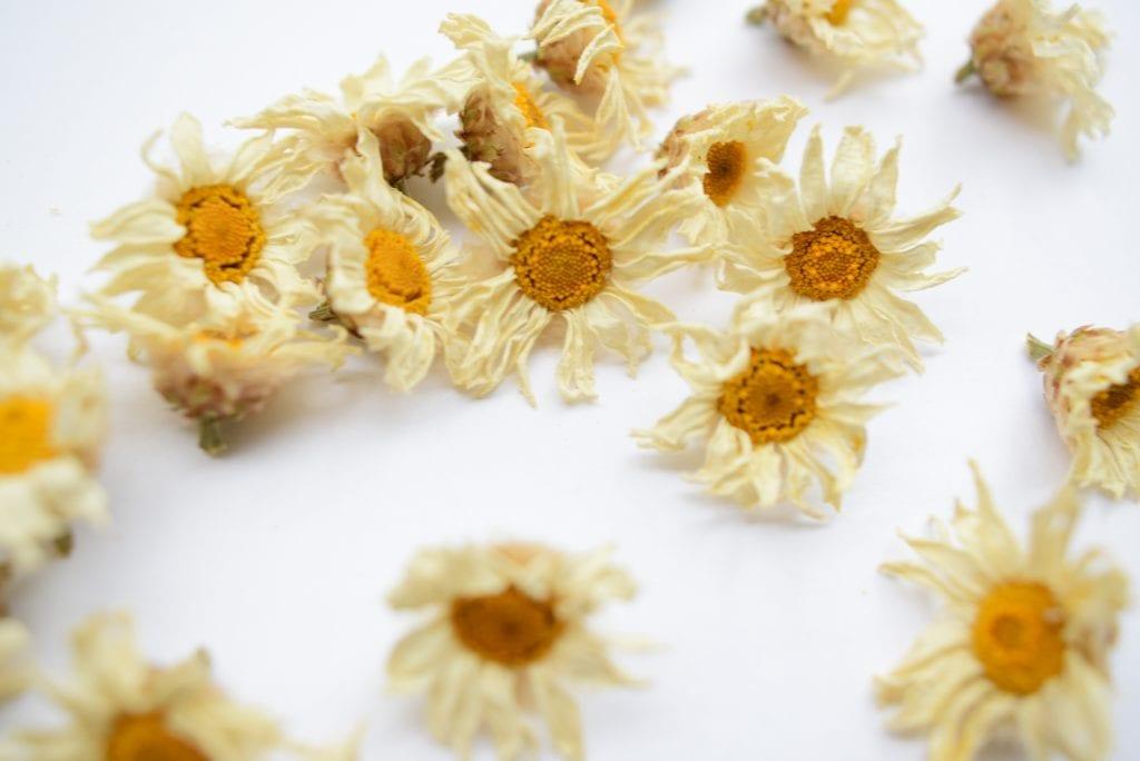 dry marguerite daisies
