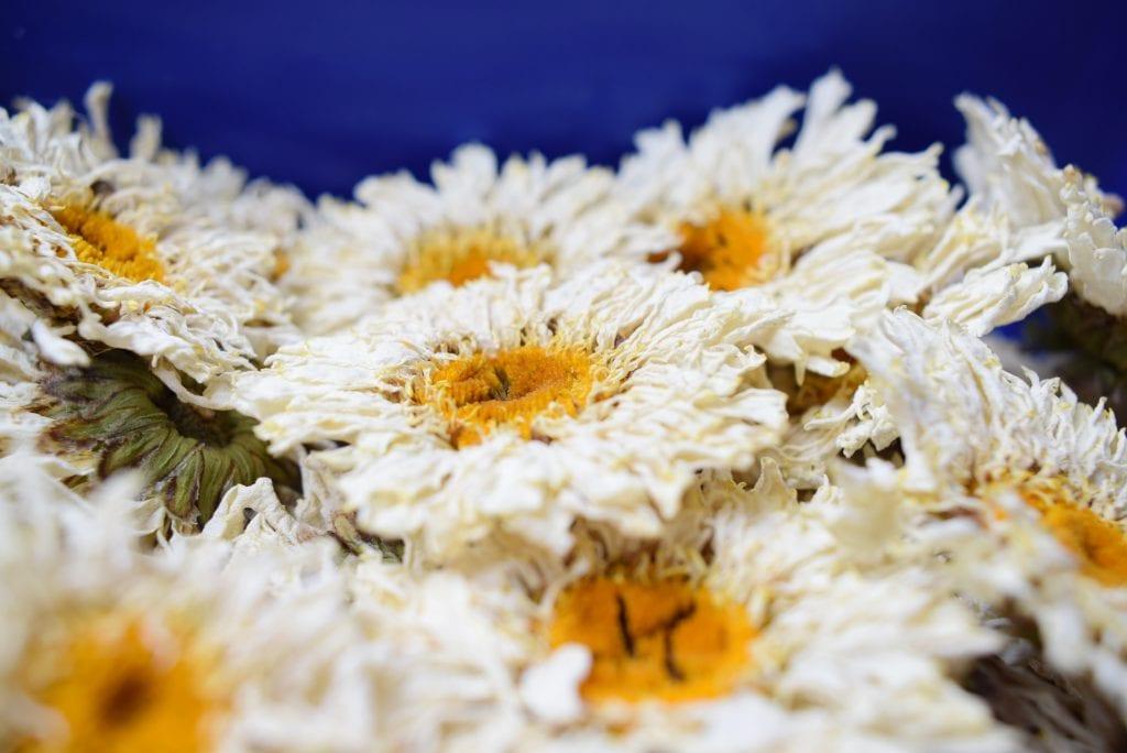dry flowers shatsa daisies