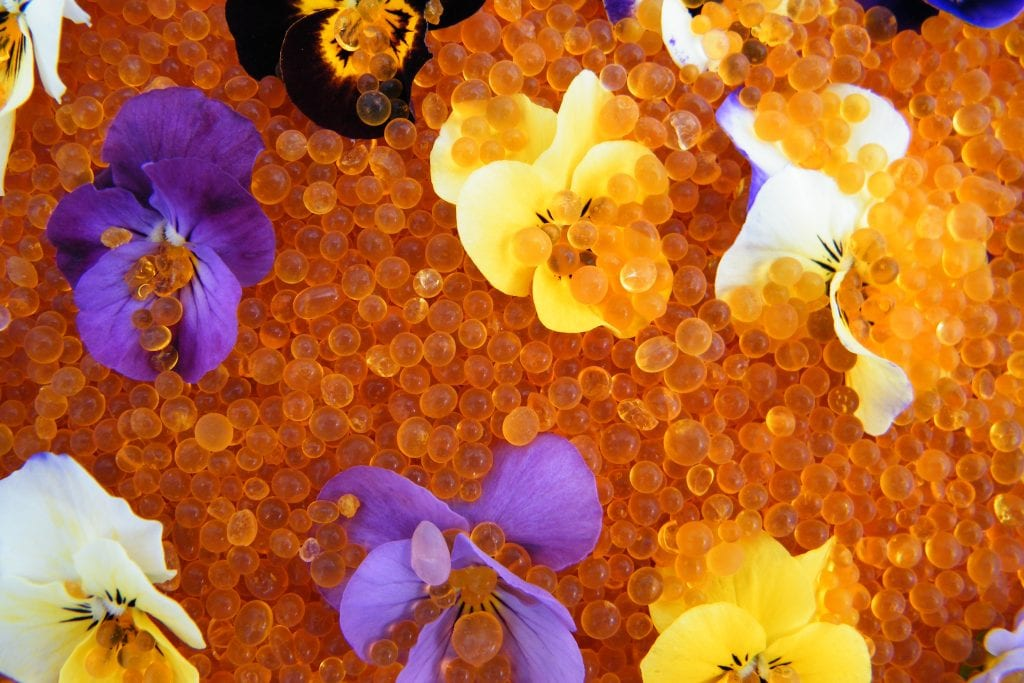covering violas with silica gel to dry