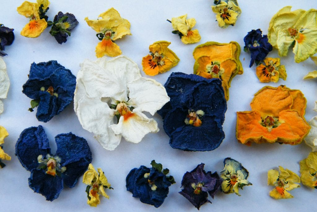 air dried flowers violas