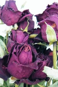 dried roses valentine