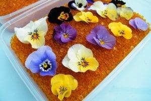 drying flowers silica gel violas