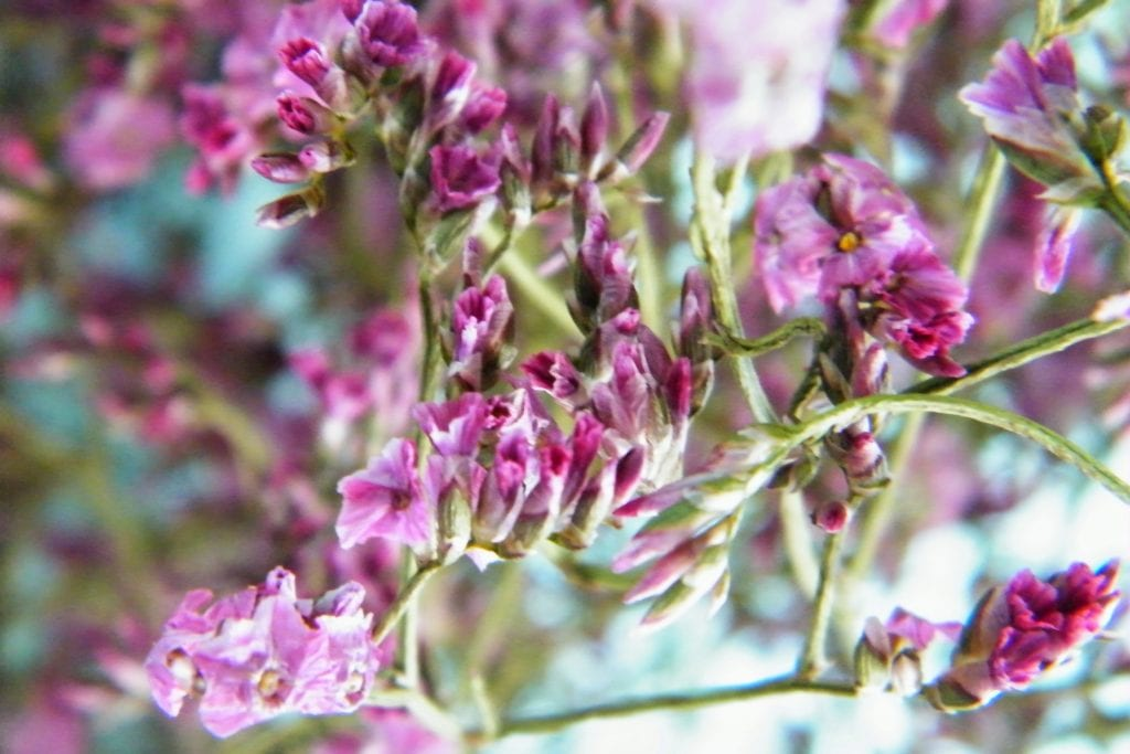 pink flowers detail