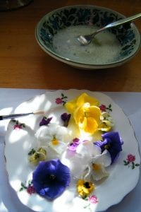 violas egg white