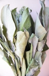 dried robusta leaves