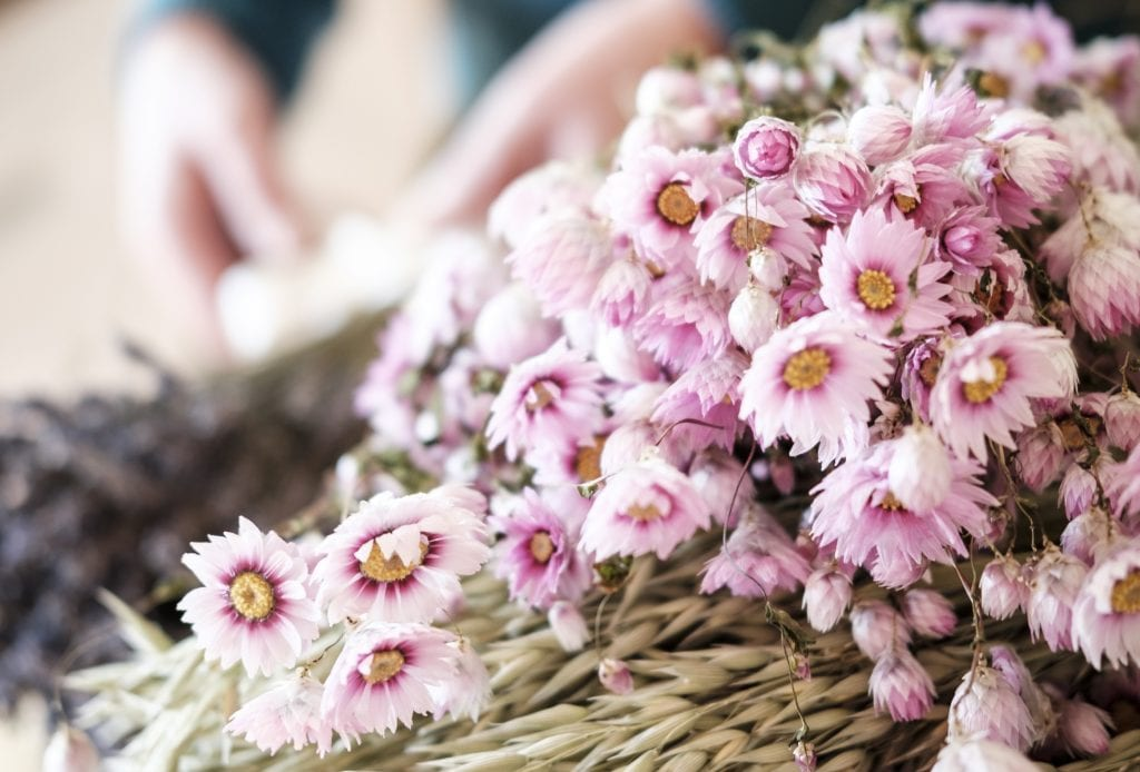 dried flower bunches petals