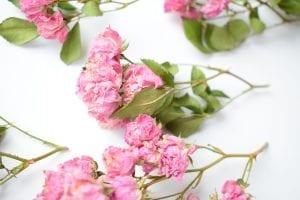 dried fairy roses garden