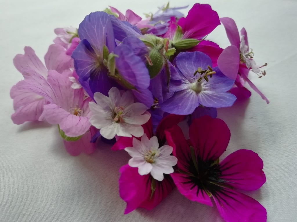 geraniums ready for pressing