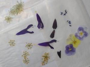 pressed ammi salvia didiscus viola fennel