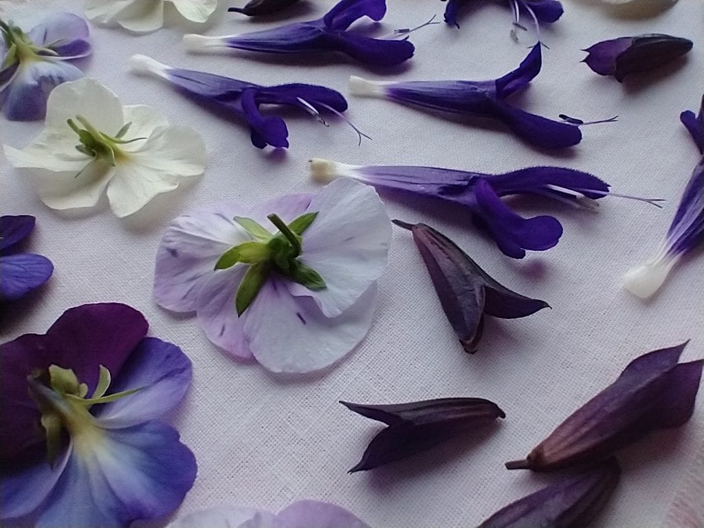 viola salvia flower press