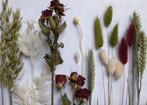 dried christmas flowers