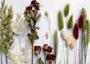 single dry flower stems